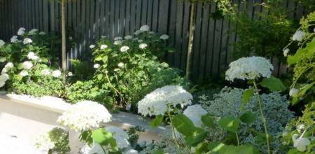 Small Contemporary Garden Makeover Hampstead